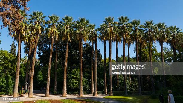 Palmeira nos jardins nacionais, Atenas, Grécia
