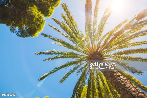 palm tree in the caribbean sea - varadero beach stock pictures, royalty-free photos & images