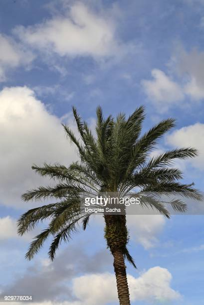 Palm Tree in the warm weather sky