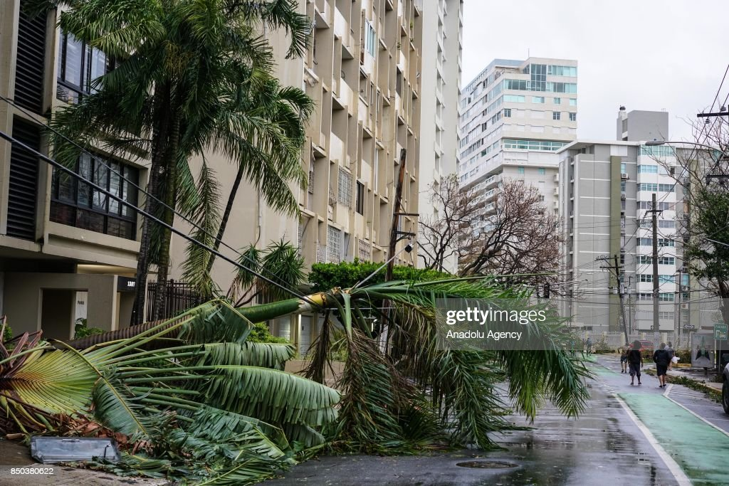 A palm tree is balanced on fallen power lines after Hurricane Maria at Condado in San Juan, Puerto Rico on September 20, 2017.