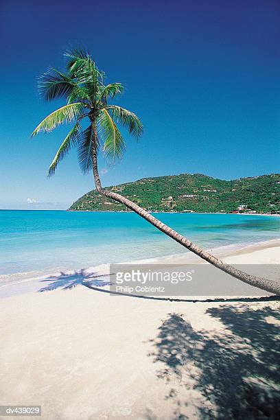 palm tree leaning over tropical beach - cane garden bay stock pictures, royalty-free photos & images