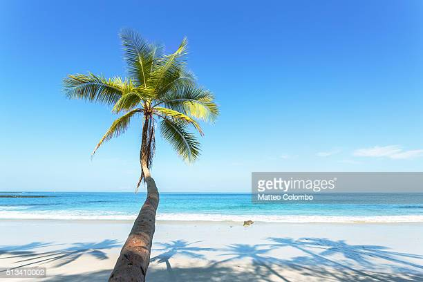 Palm tree leaning toward tropical beach with blue sky, Costa Rica