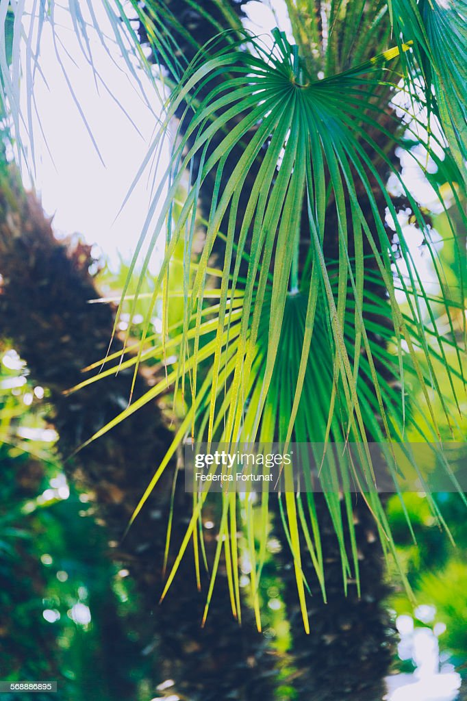 Palm tree leaves shining in the sunlight : Stock Photo