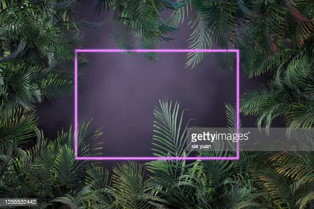 palm tree leaves with geometric lit neon - selva tropical fotografías e imágenes de stock