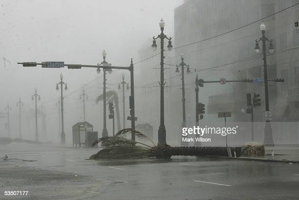Palm tree lies on Canal Street during the heavy rain and wind from Hurricane Katrina August 29, 2005 in New Orleans, Louisiana. Katrina has been down...