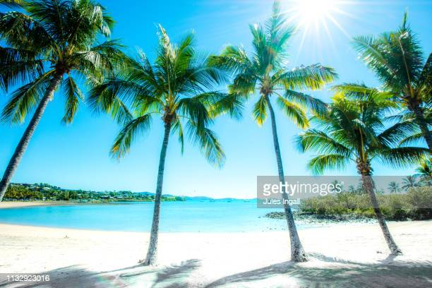 palm tree lined beach - whitsunday island stock photos and pictures