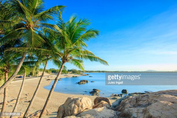 palm tree lined cove in australia - queensland stock-fotos und bilder
