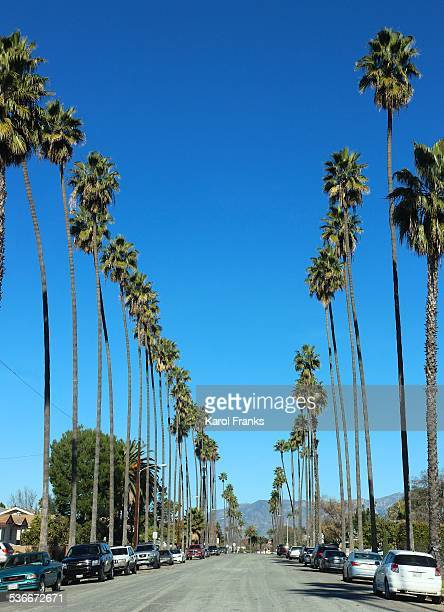 Palm tree lined street in California