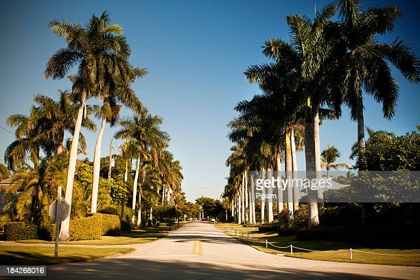 palm tree lined street in florida - fort myers stock pictures, royalty-free photos & images