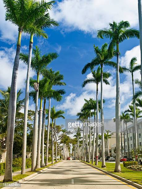 palm tree lined street - west palm beach stock pictures, royalty-free photos & images
