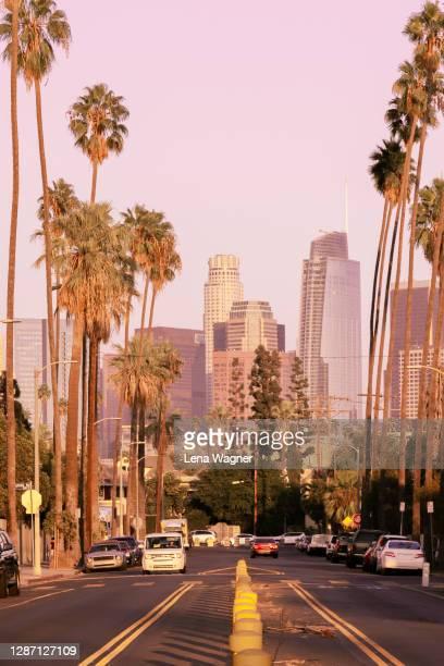 palm tree lined street toward downtown los angeles - los angeles ciudad fotografías e imágenes de stock