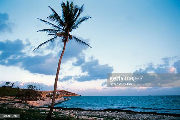 Palm tree on a beach with the Seven Mile Bridge in the background Keys Florida United States