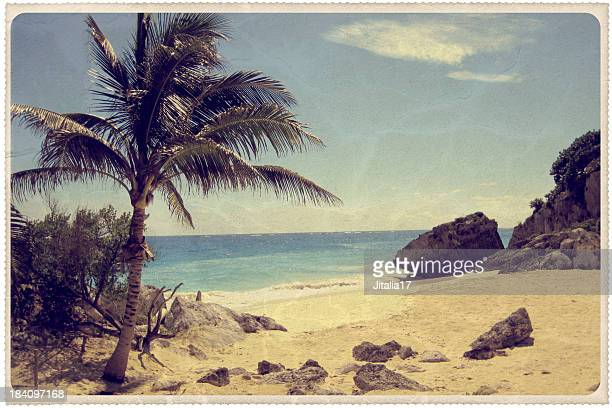 palm tree on a mexican beach - vintage postcard - retro style stock pictures, royalty-free photos & images