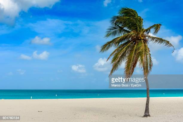 Palm Tree On Beach Against Sky