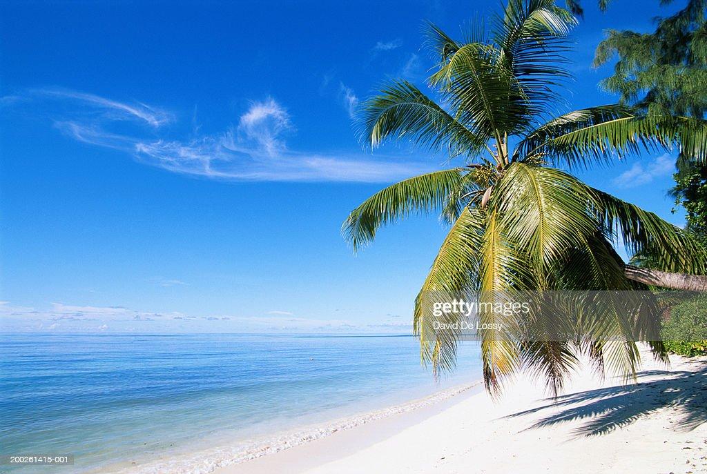 Palm tree on beach : Bildbanksbilder