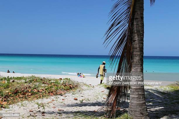 palm tree on beach, varadero, cuba - varadero beach stock pictures, royalty-free photos & images