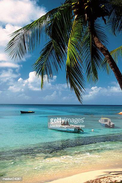 Palm tree on Britannia Bay Beach with boat in water on Mustique Island, Grenadines, Caribbean