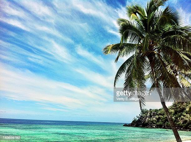 Palm tree on Castaway Island