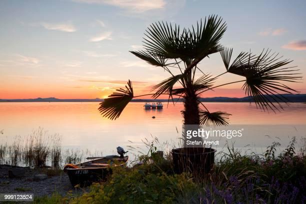 Palm tree on Lake Constance at dusk, Insel Reichenau island, Baden-Wuerttemberg, Germany, PublicGround
