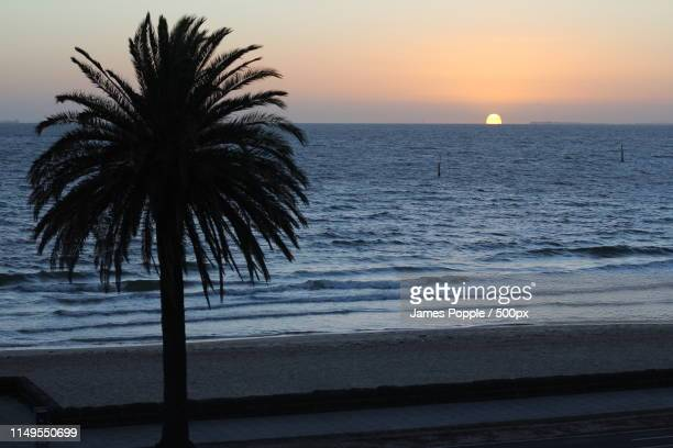 palm tree on sea shore with sunrise in horizon - james popple stock photos and pictures