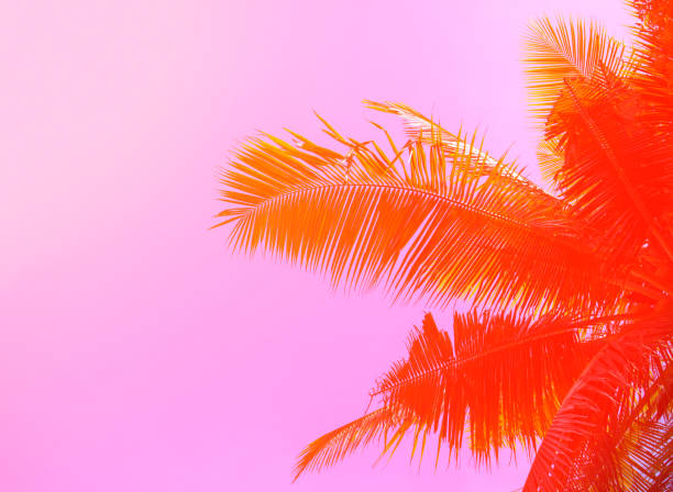 Palm tree on sky background. Palm leaf ornament. Pink and orange toned photo.