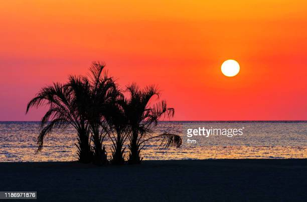 palm tree on the bach at sunrise - romantic sky stock pictures, royalty-free photos & images
