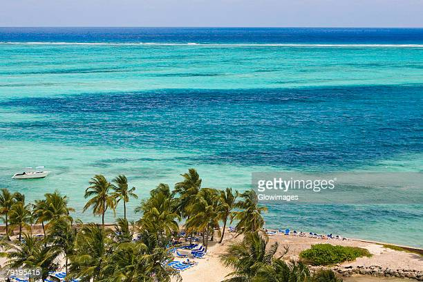 palm tree on the beach, cable beach, nassau, bahamas - cable beach bahamas stock photos and pictures