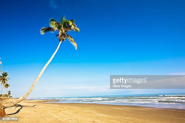 palm tree on the beach, ranch beach, papantla, veracruz, mexico - veracruz stock pictures, royalty-free photos & images