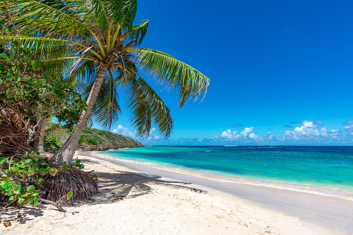 Palm tree on the tropical beach 1006274284
