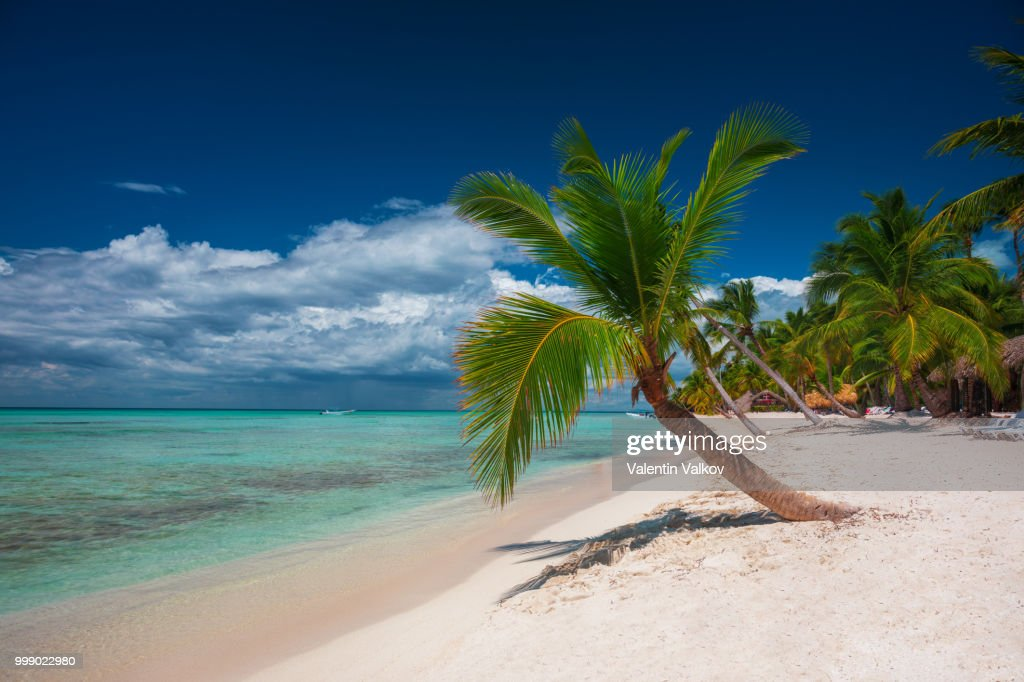 palm tree on tropical island beach saona dominican republic ストック