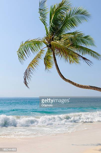 Palm tree on white sand beach
