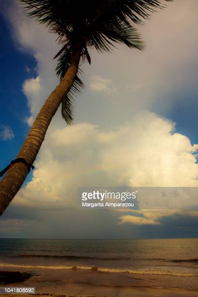 Palm tree over the sea of Tulum and the cloudy blue sky