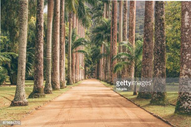 Palm Tree Path