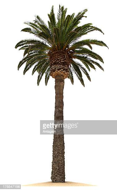palm tree - palm stock photos and pictures
