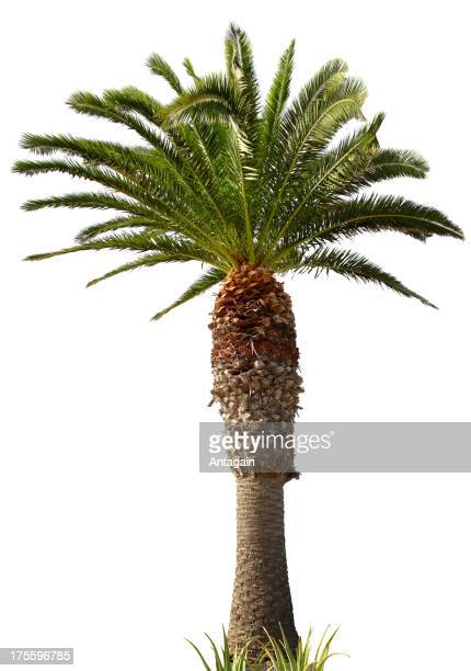 Palm tree getty images voltagebd Images