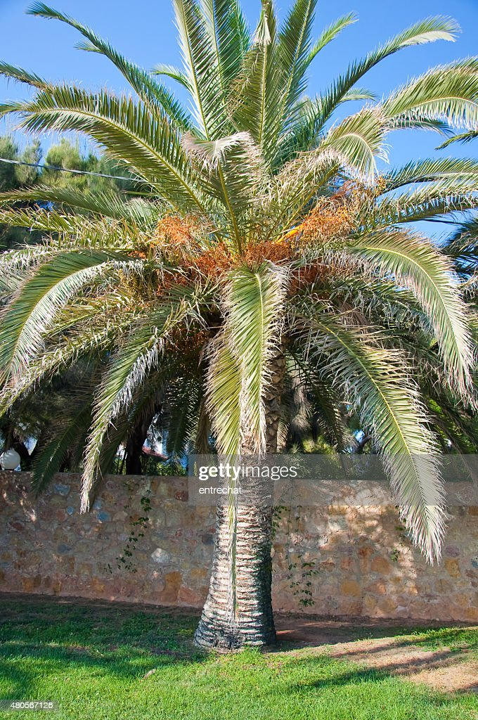 Palm tree. : Stock Photo