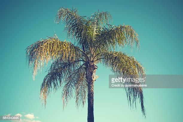palm tree - josemanuelerre fotografías e imágenes de stock