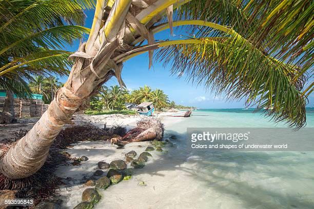 palm tree - nicaragua fotografías e imágenes de stock