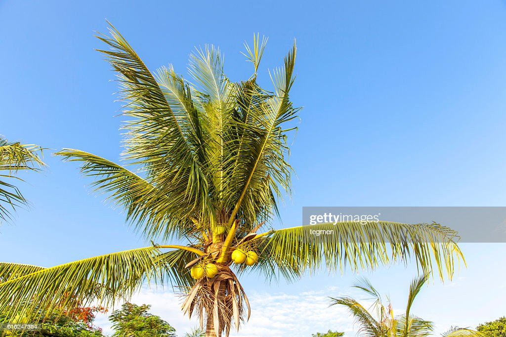 Palm Tree : Stock Photo