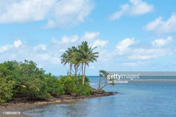 palm tree point - american samoa stock pictures, royalty-free photos & images