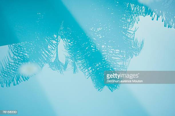 Palm tree reflected in surface of water