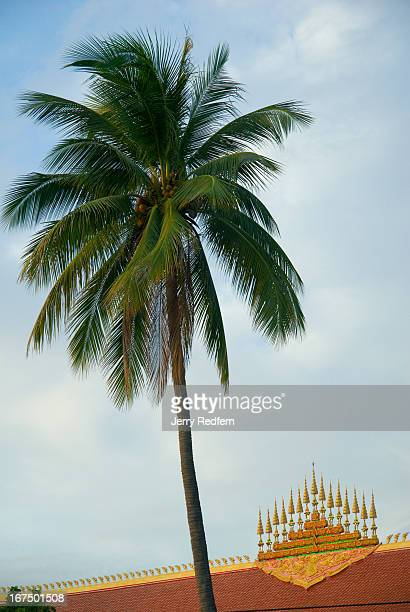 A palm tree rises above the crest of Wat Chan a Buddhist temple in Vientiane The crest is called a Dok So Fa and believed to symbolize the center of...