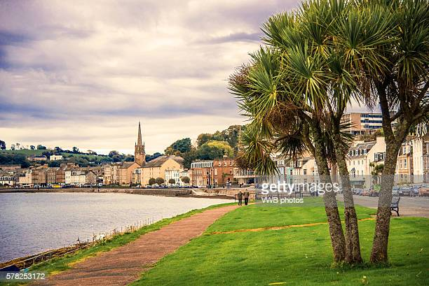 Palm Tree, Rothesay Sea Front, Isle of Bute, Argyll, Scotland
