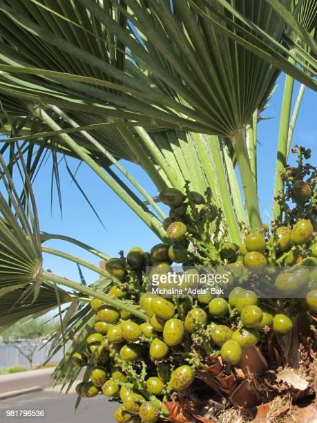 Palm Tree Seeds