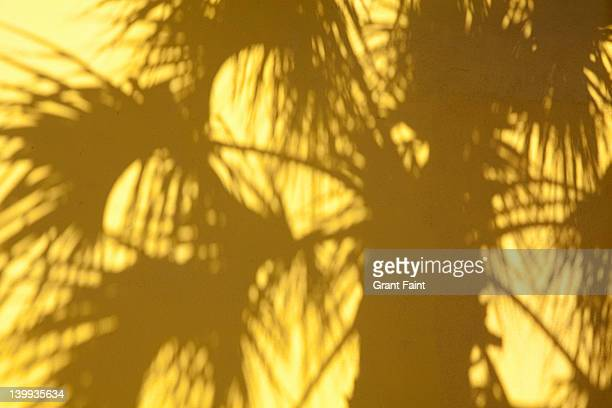 Palm tree shadow on yellow  wall.