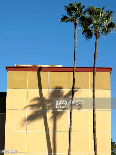 Palm tree shadows on office building