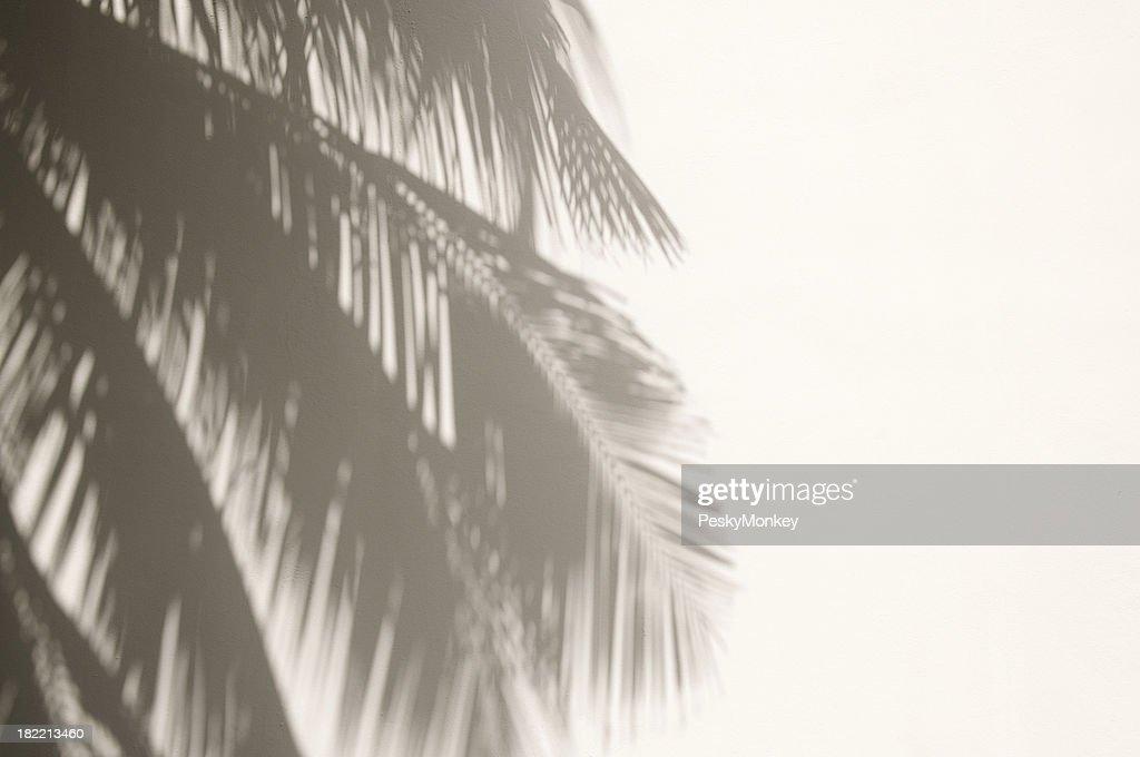 Palm Tree Shadows on White Wall : Stock Photo
