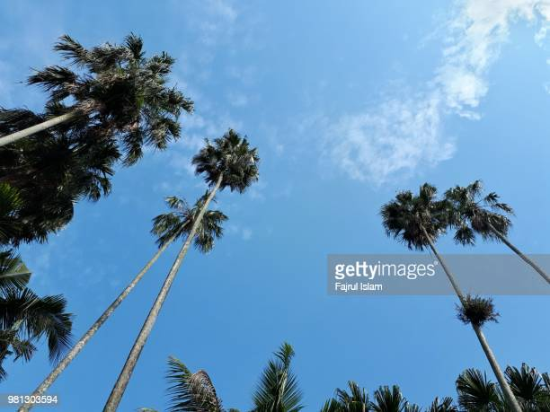 Palm tree shot in low angle against blue sky