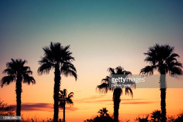 palm tree silhouette at sunset - santa monica stock pictures, royalty-free photos & images