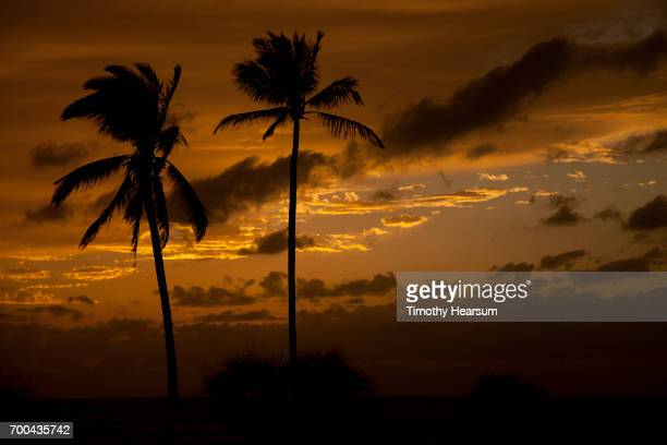 palm tree silhouettes and orange sky just after sunset - timothy hearsum stock photos and pictures